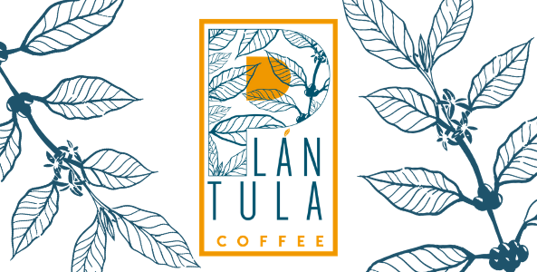 Plántula Coffee